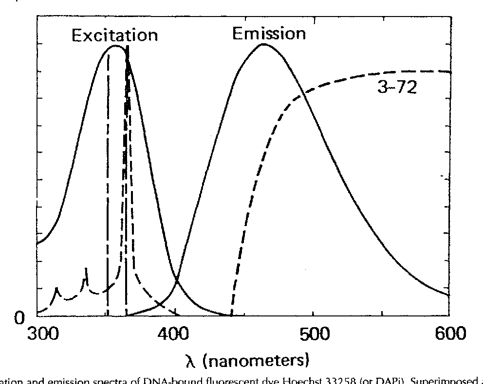 Figure 2 from DAPI: a DNA-specific fluorescent probe