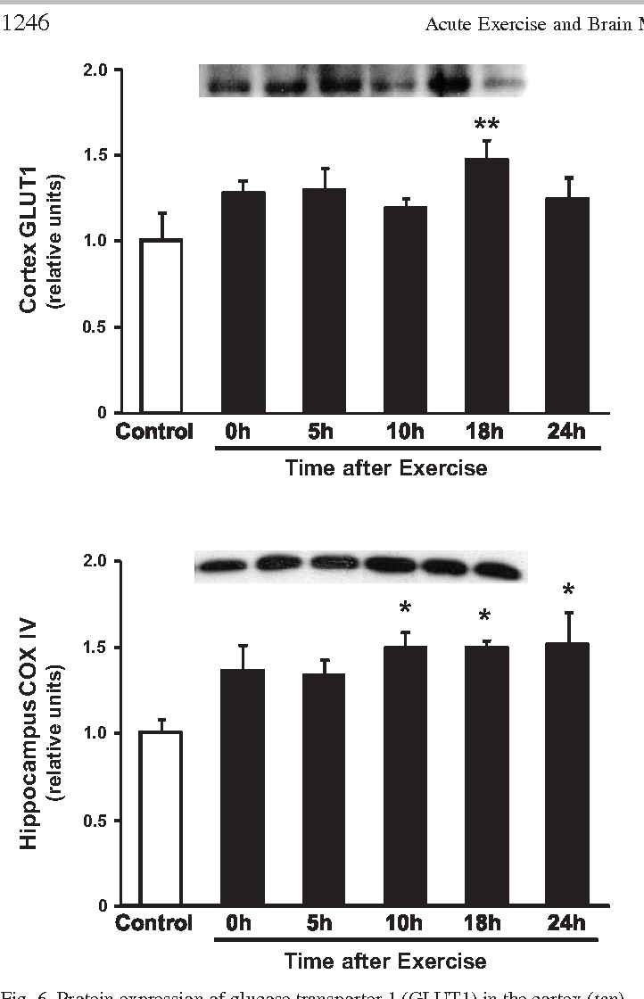 Figure 6 from Acute exercise increases brain region