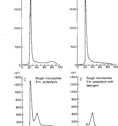 figure 5 gel filtration analysis of nascent polypeptides from purified rough microsomes labeled in vitro for [ 796 x 1052 Pixel ]