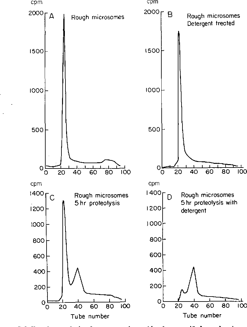 hight resolution of figure 5 gel filtration analysis of nascent polypeptides from purified rough microsomes labeled in vitro for