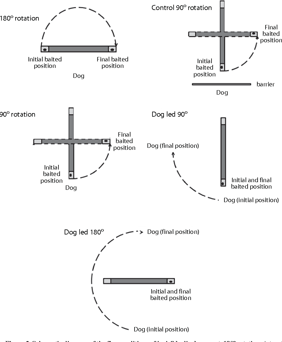 hight resolution of schematic diagram of the five conditions of invisible displacement 180 rotation