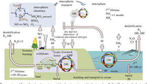 small resolution of the processing and fluxes of reactive nitrogen in terrestrial and marine systems and