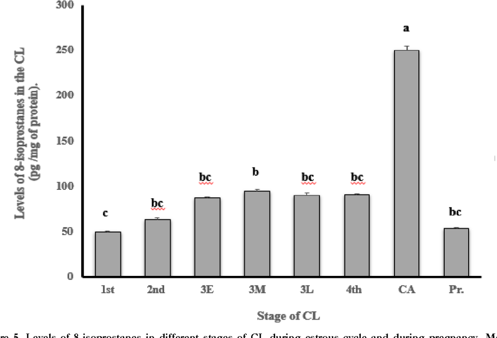 medium resolution of levels of 8 isoprostanes in different stages of cl during estrous cycle
