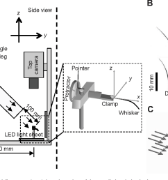 figure 1 from mechanical responses of rat vibrissae to airflow fig1 airflow diagram [ 1324 x 706 Pixel ]