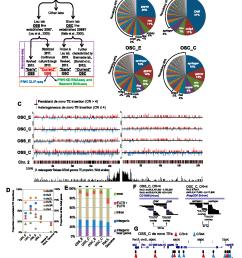 genome sequencing of follicle cell lines reveals de novo te landscape diversity  [ 1234 x 1438 Pixel ]