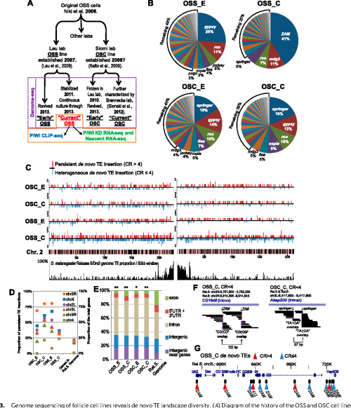 small resolution of genome sequencing of follicle cell lines reveals de novo te landscape diversity