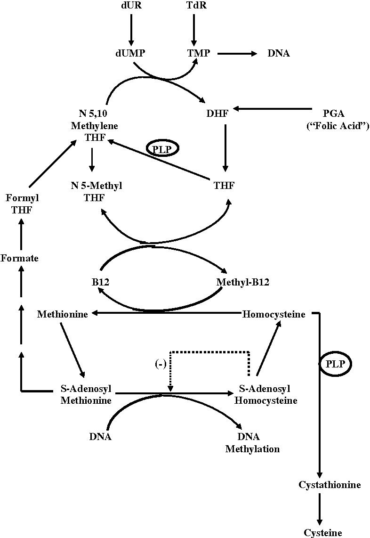 Figure 1 from Disorders of cobalamin (vitamin B12