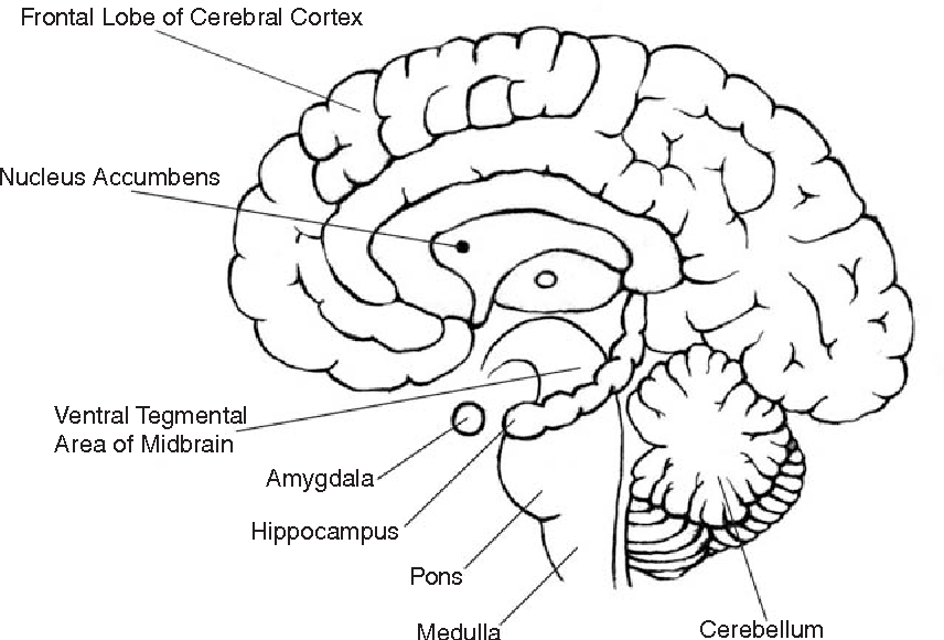 Figure 1 from Why Addiction Has a Chronic , Relapsing