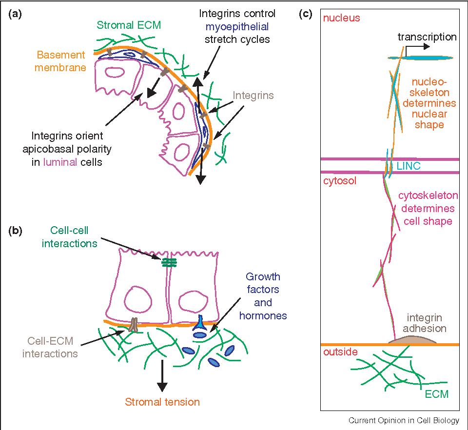 hight resolution of ecm biology