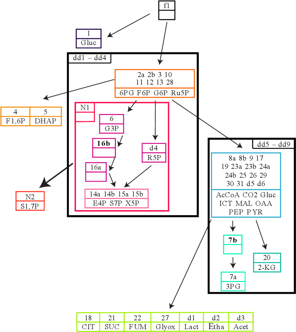 medium resolution of figure 8 7 the full flux influence graph of the tca cycle model invariants a