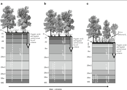 small resolution of 2 schematic representation of the genesis of acid soils at the gallignano wood