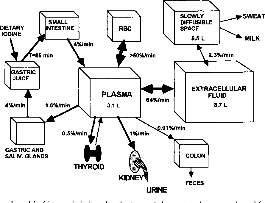 Figure 1 from Iodine metabolism and thyroid physiology