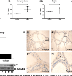 il7 expression is increased in a prostate specific manner in eapmice a [ 1430 x 846 Pixel ]