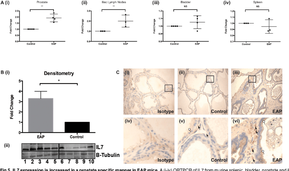 medium resolution of il7 expression is increased in a prostate specific manner in eapmice a