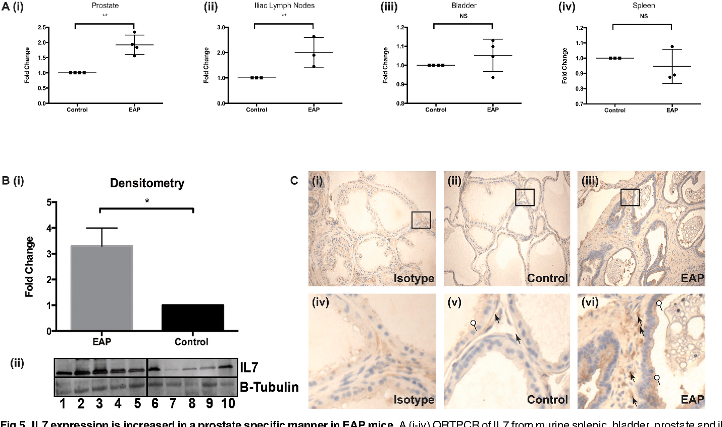 hight resolution of il7 expression is increased in a prostate specific manner in eapmice a