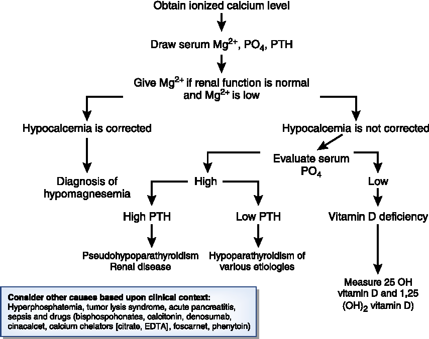Figure 1 from Hypocalcemia in a Patient with Cancer