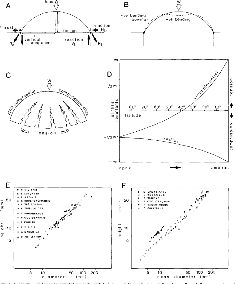 medium resolution of a diagram of forces transmitted by arch loaded at apex by force