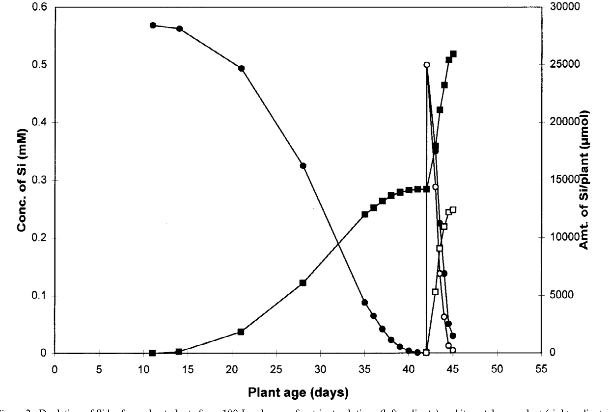 hight resolution of depletion of si by four wheat plants from 100 l volumes of