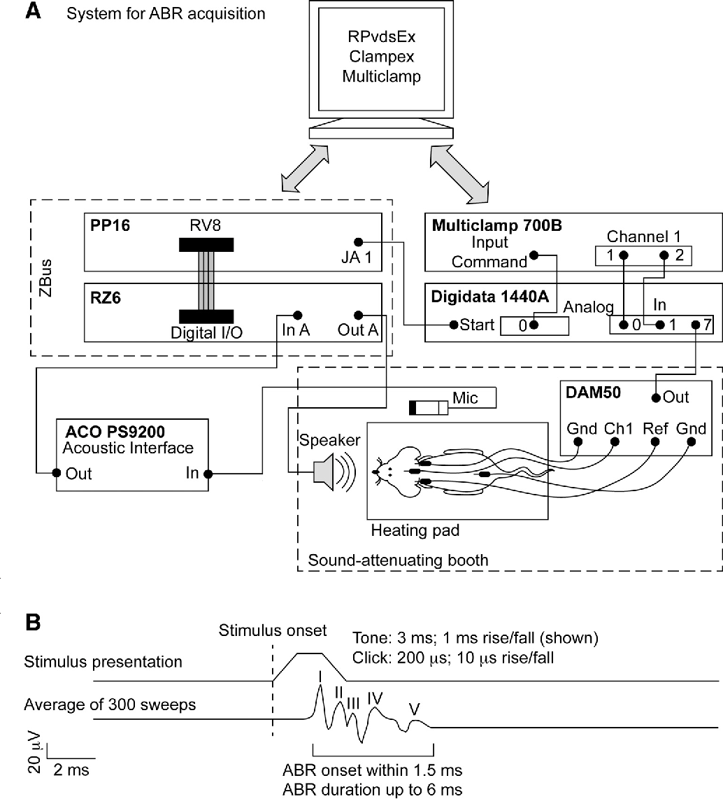 hight resolution of heating pad wiring diagram figure 2 from a physiological and behavioral system for hearingschematic of the abr setup a wiring
