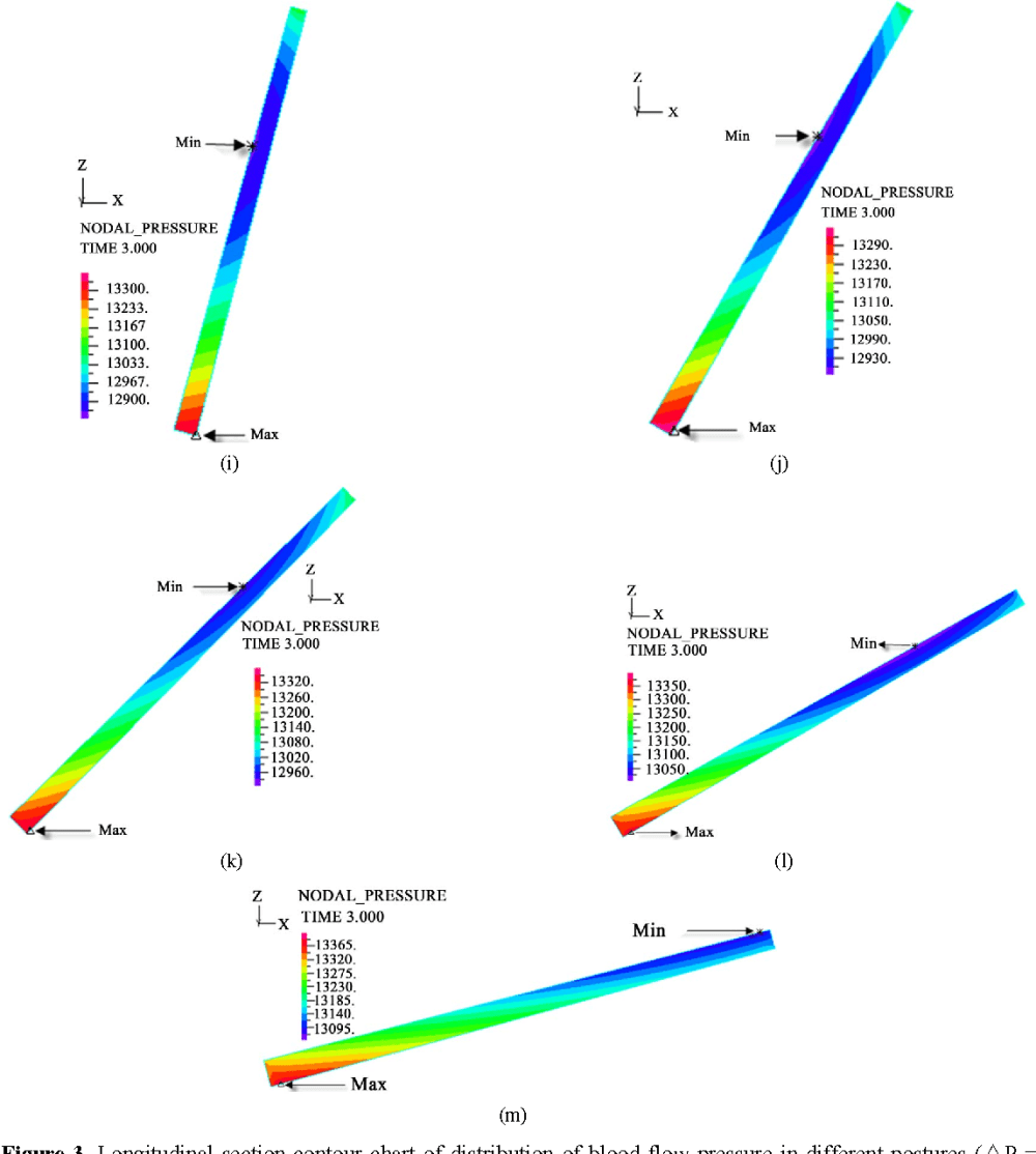 medium resolution of figure 3 longitudinal section contour chart of distribution of blood flow pressure in different postures