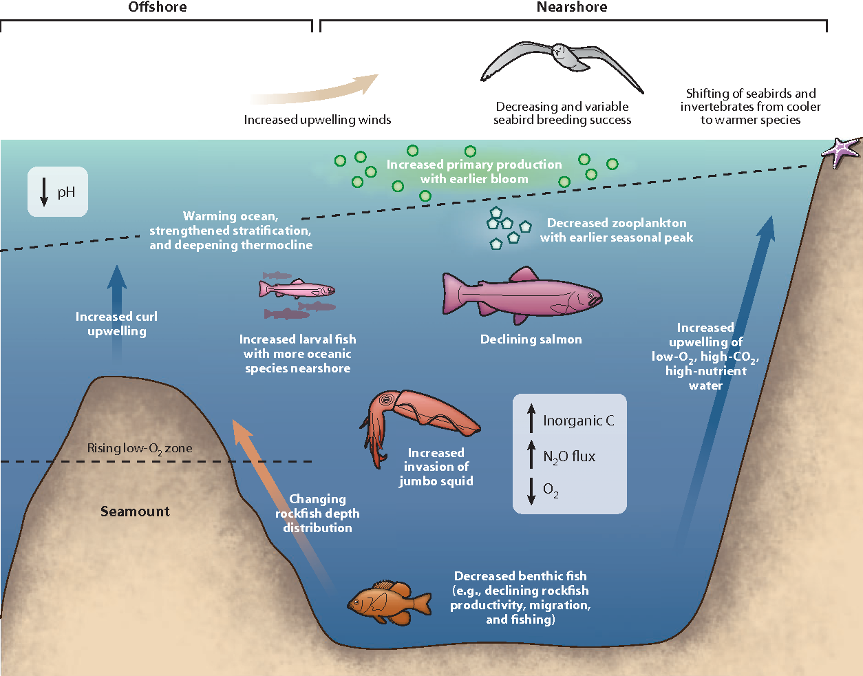 Figure 3 From Climate Change Impacts On Marine Ecosystems