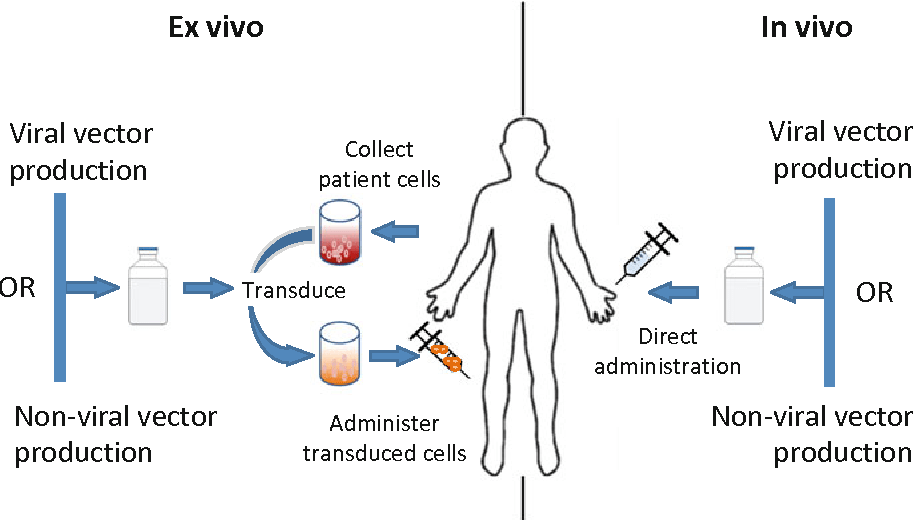 in vivo gene therapy diagram power window wiring ford f150 figure 1 from semantic scholar ex and approaches to