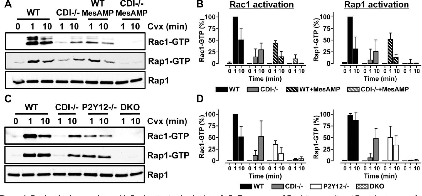 Figure 1 from Rap1-Rac1 circuits potentiate platelet