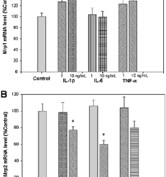 effect of proinflammatory cytokines on mrp mrna expression in vitro in hepa [ 844 x 1204 Pixel ]