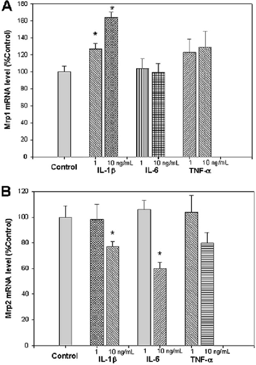 small resolution of effect of proinflammatory cytokines on mrp mrna expression in vitro in hepa