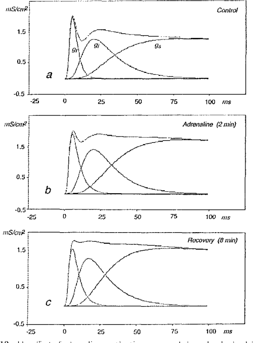 small resolution of figure 12 1 he effect of adrenaline on the time course ol the individual calcium