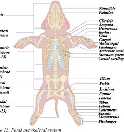 fetal pig skeletal system [ 960 x 862 Pixel ]