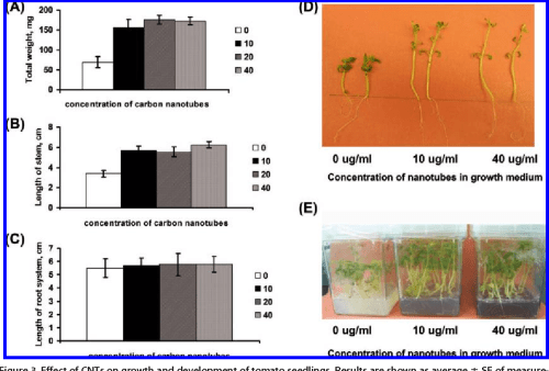 small resolution of effect of cnts on growth and development of tomato seedlings results are