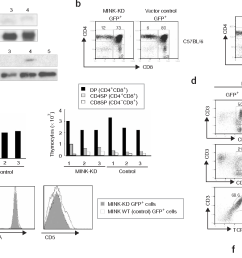 figure 2 characterization of mink deficient mice a top rna blot [ 1418 x 836 Pixel ]