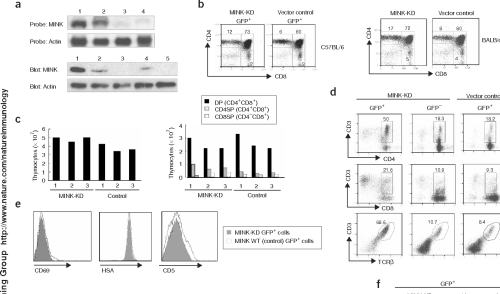 small resolution of figure 2 characterization of mink deficient mice a top rna blot