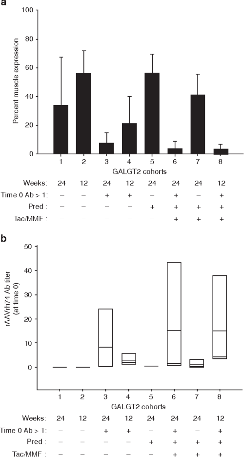 small resolution of figure 5 effect of immune suppression on muscle galgt2 transgene expression rhesus macaques were treated