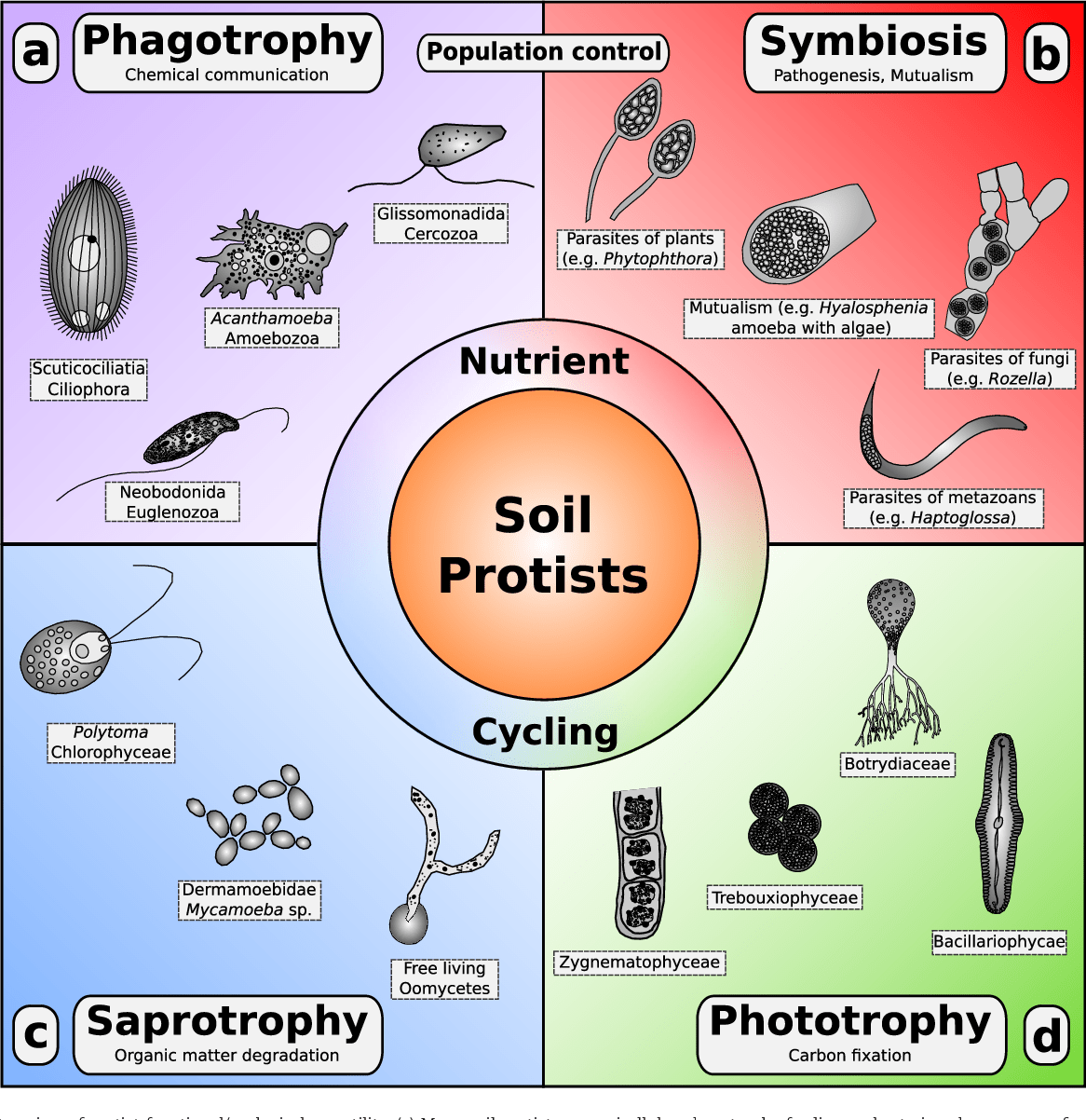 hight resolution of overview of protist functional ecological versatility a many soil