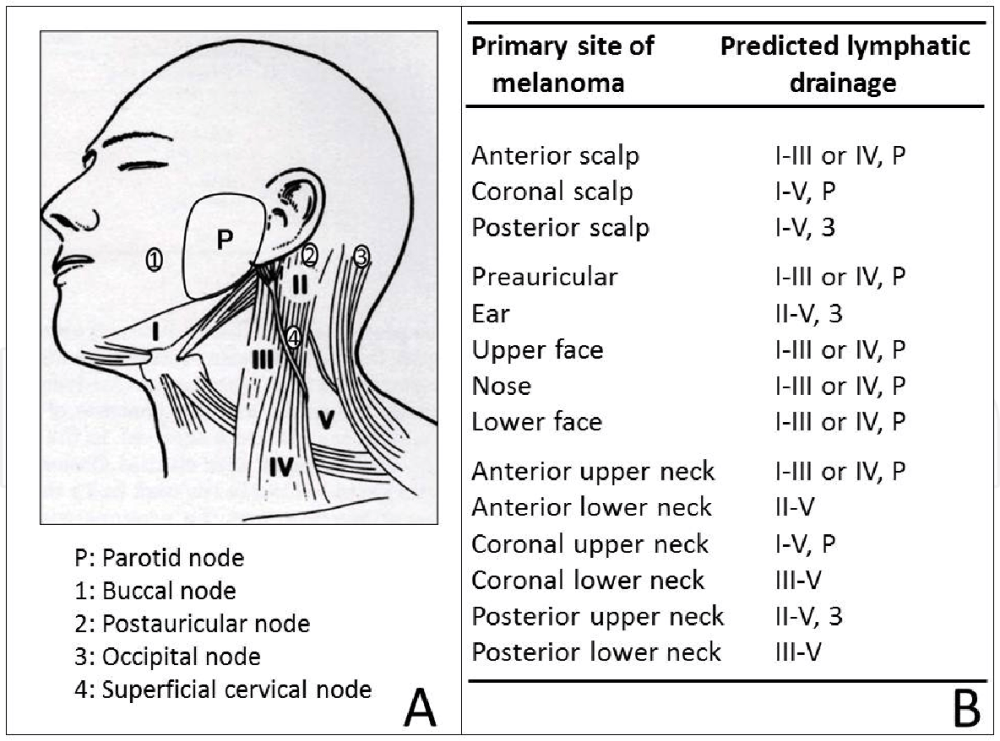 medium resolution of a lymphatic anatomy of the head and neck showing the 5 major