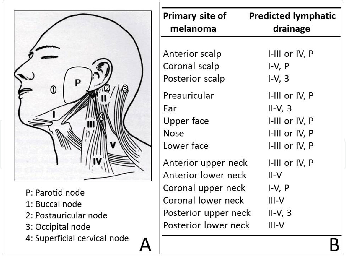 hight resolution of a lymphatic anatomy of the head and neck showing the 5 major