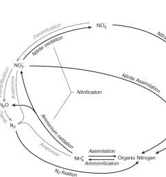 figure 1 2 major chemical forms and transformations of nitrogen in the marine environment the various [ 998 x 790 Pixel ]