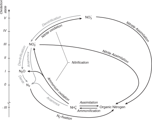 small resolution of figure 1 2 major chemical forms and transformations of nitrogen in the marine environment the various