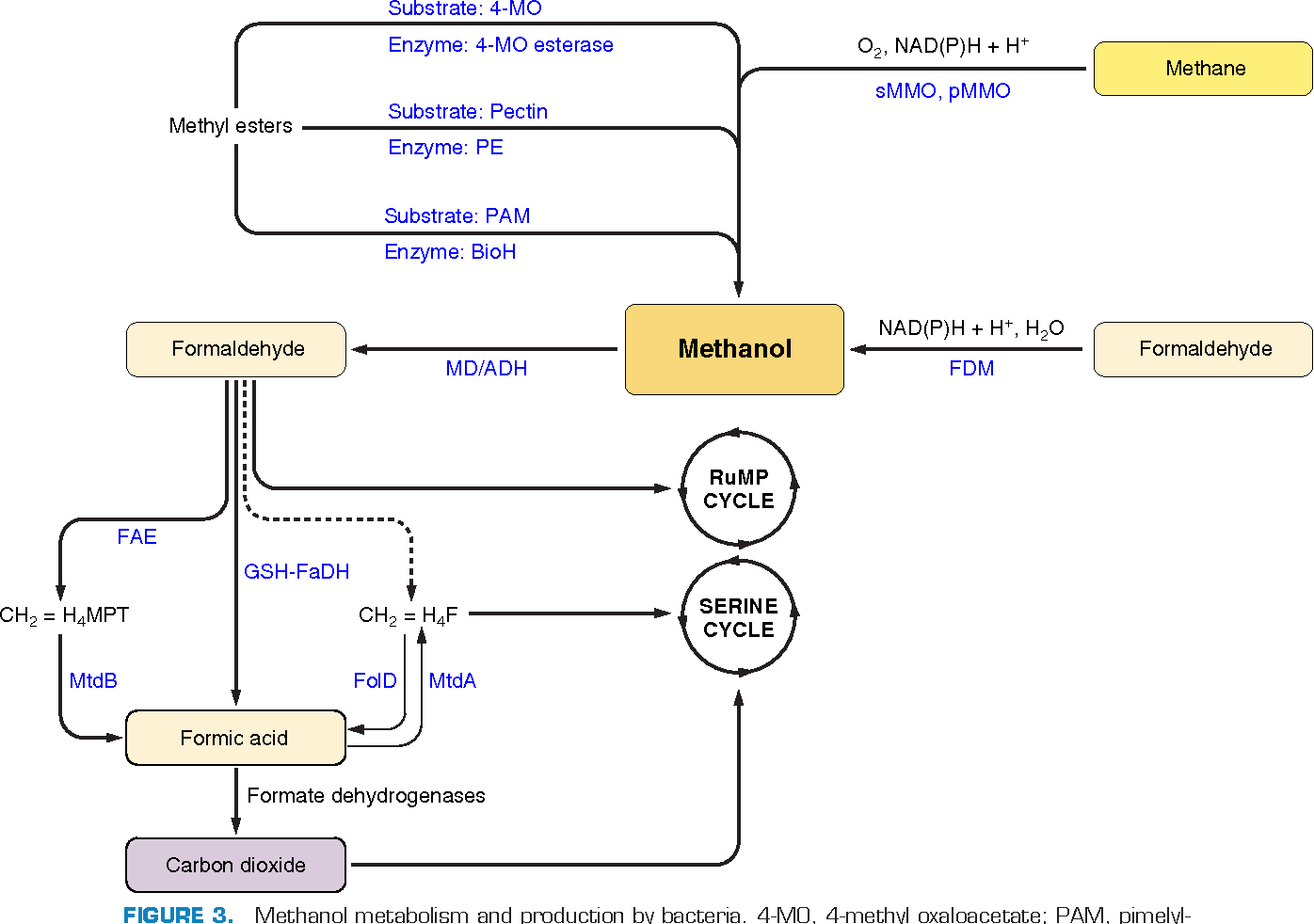 hight resolution of methanol metabolism and production by bacteria 4 mo 4
