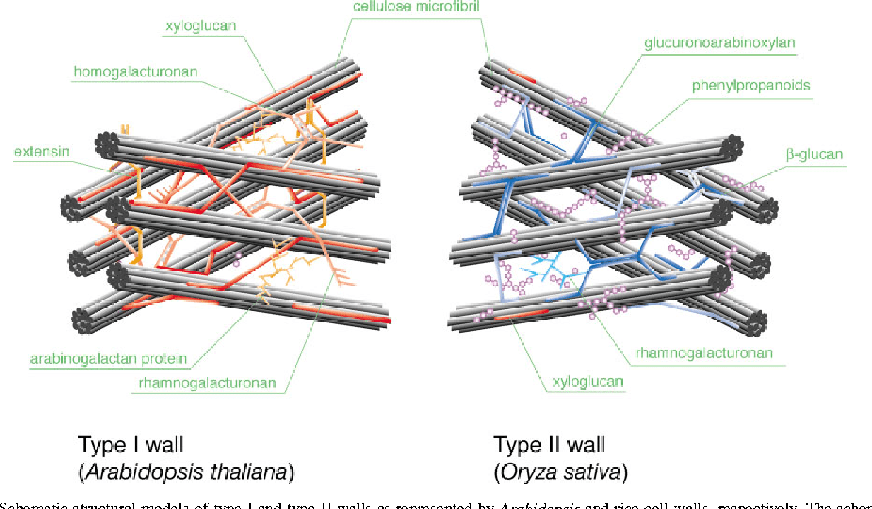 hight resolution of 1 schematic structural models of type i and type ii walls as represented by