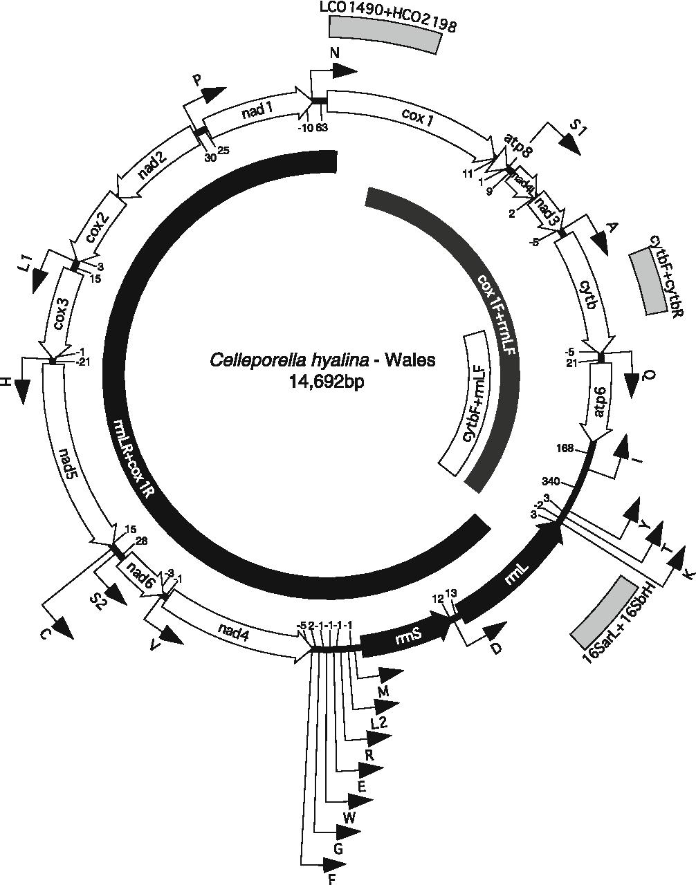 Figure 2 from Molecular variability in the Celleporella