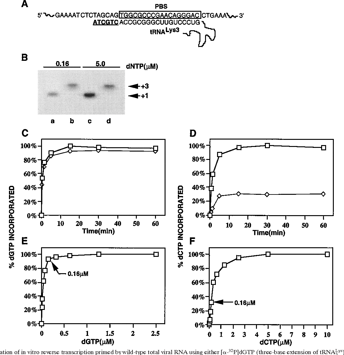 hight resolution of initiation of in vitro reverse transcription primed by wild type total