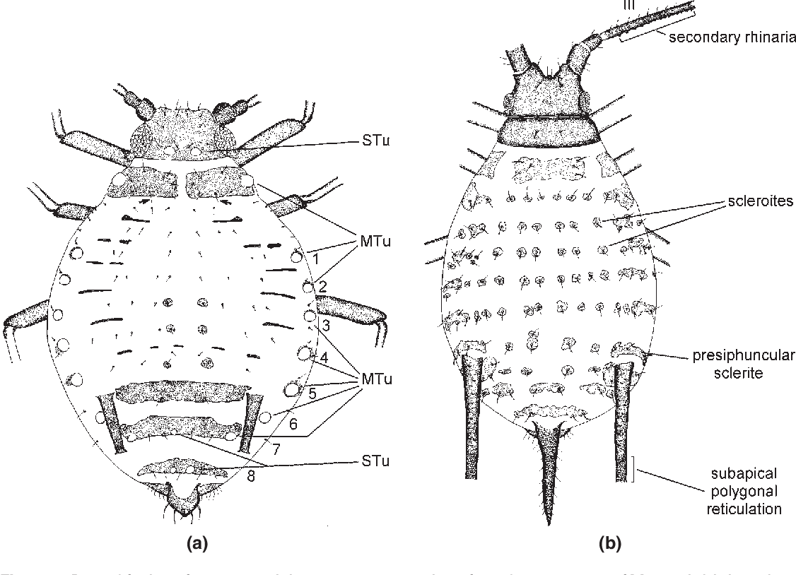 Figure 2 from Aphids on the world's herbaceous plants and