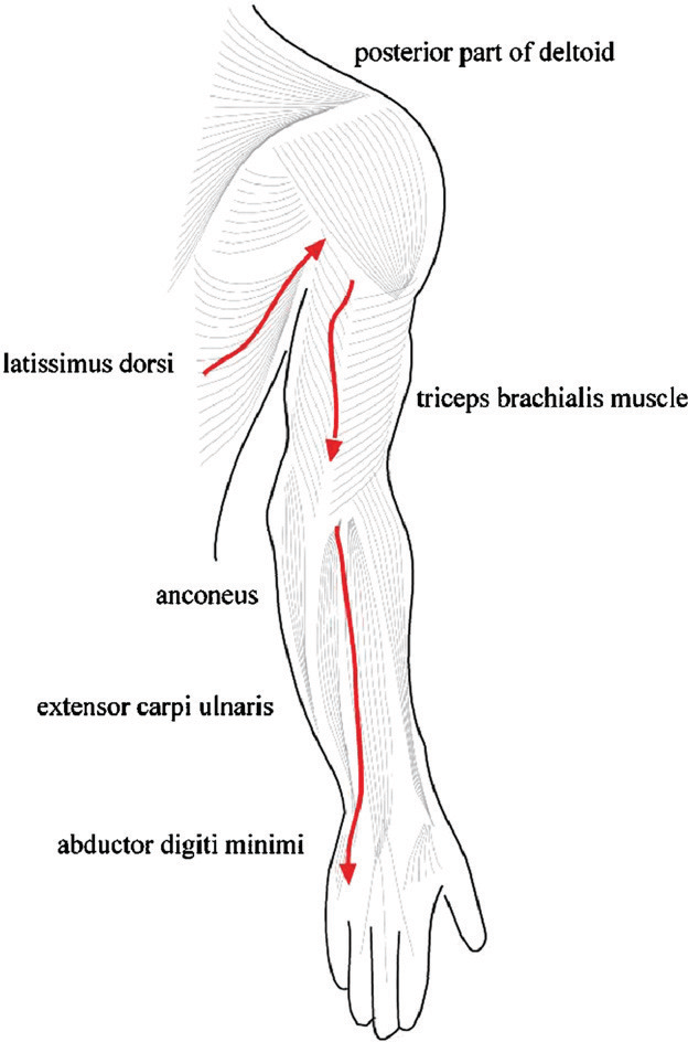 Figure 1 from Application of Fascial Manipulation