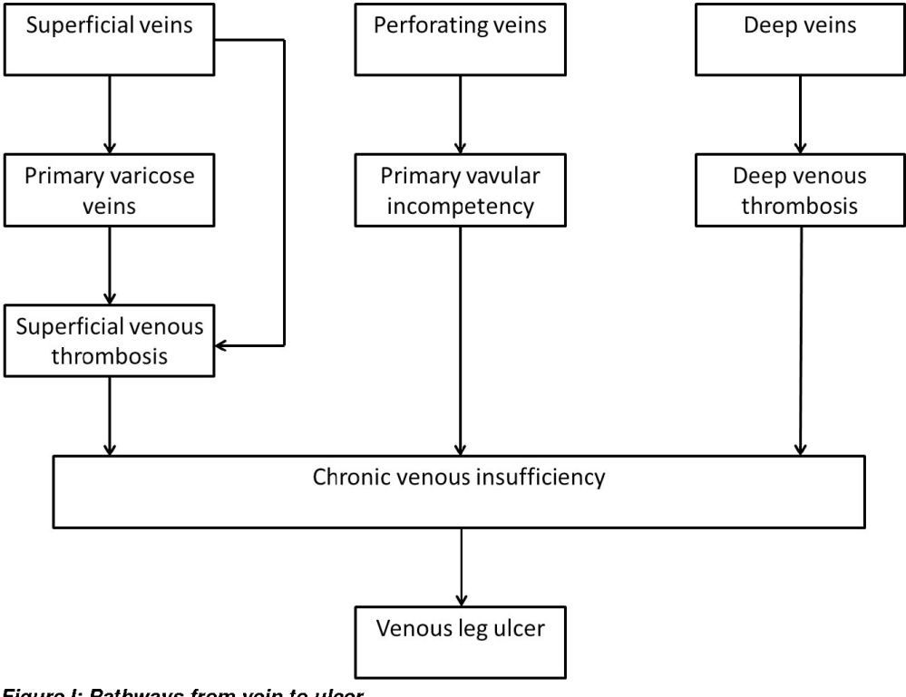 medium resolution of figure i pathways from vein to ulcer