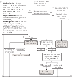 1 algorithm formanagement of lower urinary tract symptoms inmales a this [ 936 x 1054 Pixel ]