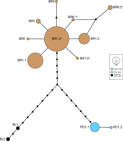 small resolution of fig 11 median joining mj network reconstructed using 5 3 kb y