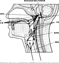distribution of sensory receptors in pharynx and larynx and their connection via [ 1296 x 682 Pixel ]